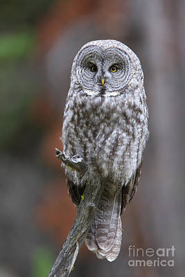 Photograph - Perched Gray by Bill Singleton