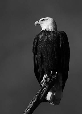Photograph - Perched In Black And White by Scott Rackers