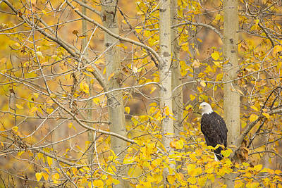 Perched In The Colors Of Autumn Art Print by Tim Grams