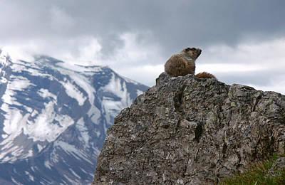 Perched Marmot Art Print by Gene Tewksbury