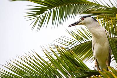 Animals Photos - Perched On a Palm by Arthur Fish III