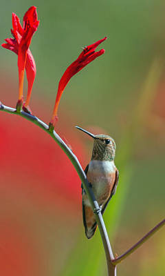 Tiny Bird Photograph - Perched On Crocosmia by Angie Vogel