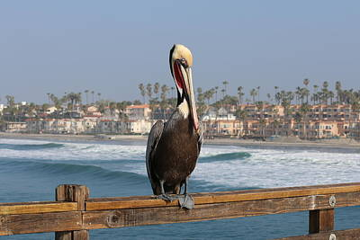 Photograph - Perched On The Pier by Christy Pooschke