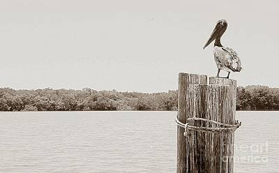 Photograph - Perched Pelican by Jeanne Forsythe