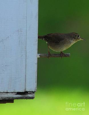 Photograph - Perched Wren by Mark McReynolds