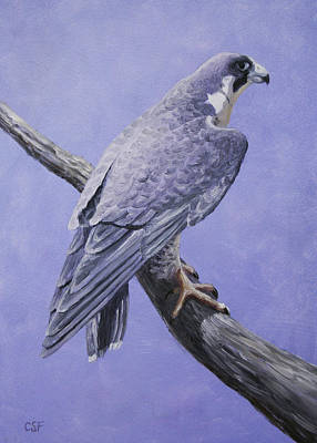 Birds Of Prey Painting - Peregrine Falcon by Crista Forest