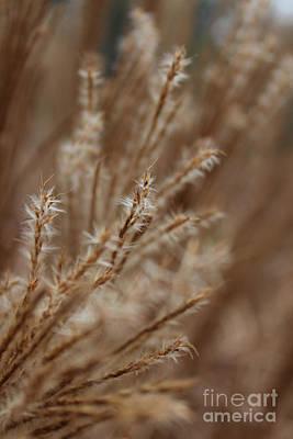 Perennial Grass Print by Arlene Carmel