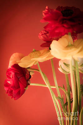 Cut Flowers Photograph - Perfctly Poised by Jan Bickerton