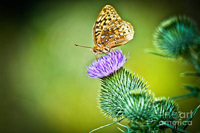 Photograph - Perfect Butterfly by Cheryl Baxter