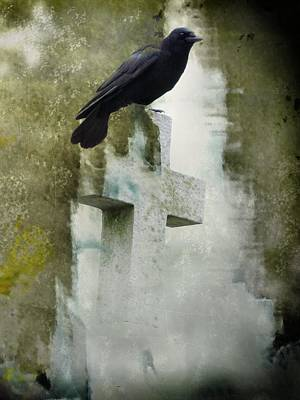 Perfect Perch Art Print by Gothicrow Images