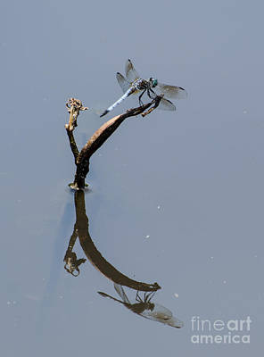 Photograph - Perfect Reflection by Donna Brown