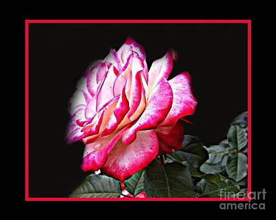 Painting - Perfect Rose by Shelia Kempf