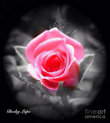 Photograph - Perfect Rosebud In Black by Becky Lupe