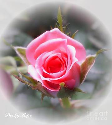 Photograph - Perfect Rosebud In The Light by Becky Lupe
