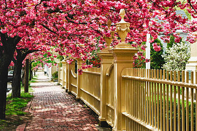 Perfect Time For A Spring Walk Art Print