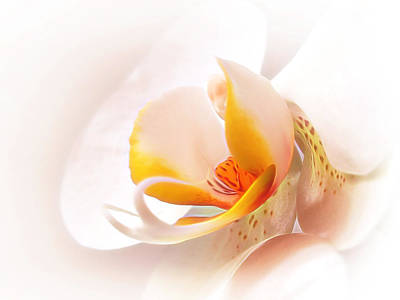 White Orchid Photograph - Perfection by Gill Billington