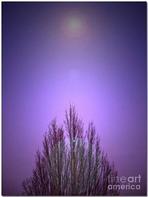 Photograph - Perfectly Purple by Chris Anderson