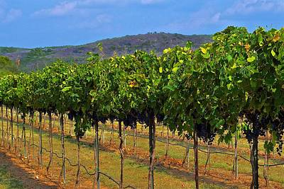 Photograph - Perissos Hill Country Vineyard by Kristina Deane