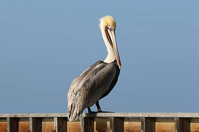 Photograph - Perky Pelican  by Christy Pooschke
