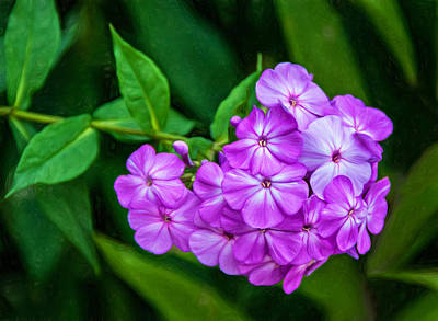 Perky Purple Phlox - Paint Art Print by Steve Harrington