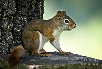 Sepia Photograph - Perky Squirrel by Cheryl Baxter