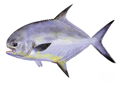 Cobia Painting - Permit by Carey Chen