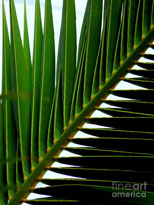 Photograph - Perpendicular Green by Michael Hoard