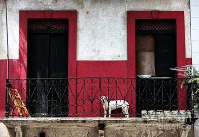 Photograph - Perro En Balcon by John Rizzuto