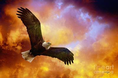 Eagle In Flight Photograph - Perseverance by Lois Bryan