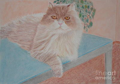 Persian Cat Art Print by Cybele Chaves