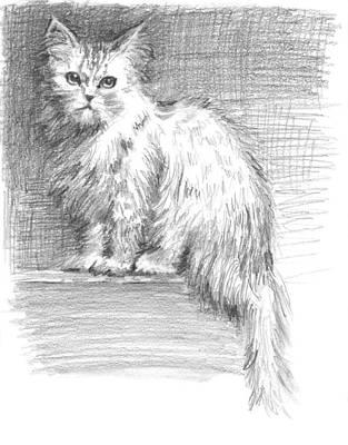 Persian Cat Art Print by Sarah Parks