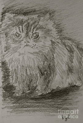 Drawing - Persian Cat Study by Victoria Lakes