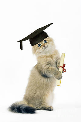 Good Luck Photograph - Persian Cat With Diploma by Jean-Michel Labat