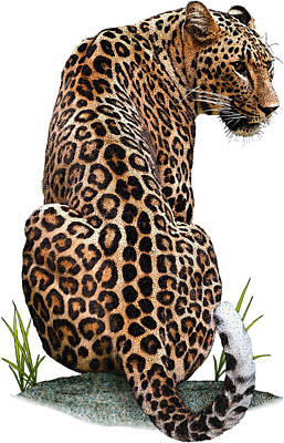 Photograph - Persian Leopard, Illustration by Roger Hall