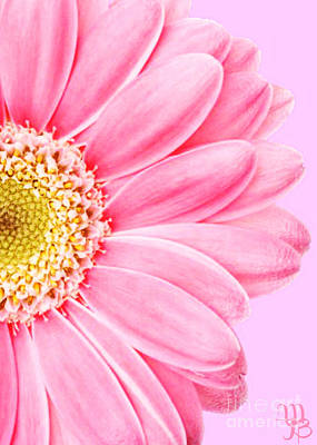 Photograph - Persian Pink Daisy by Mindy Bench