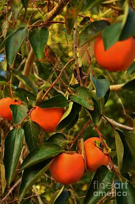 Photograph - Persimmons  by Bob Sample