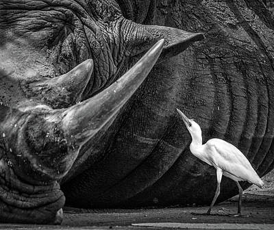 Egret Photograph - Personal Advisor by Giovanni Casini
