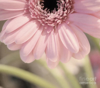 Photograph - Personally Pink by Traci Cottingham