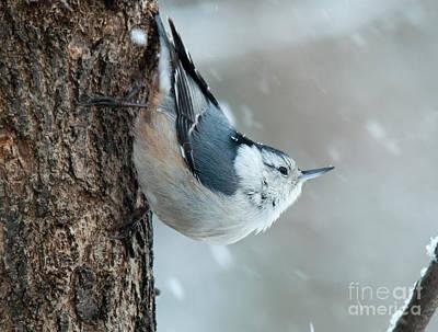 Winter Scene. Winter Landscape. Snow Landscape. Black And White. Birds Photograph - Perspective by Cheryl Baxter