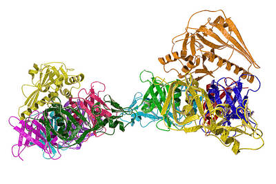 Cough Medicine Photograph - Pertussis Toxin Molecule by Kateryna Kon