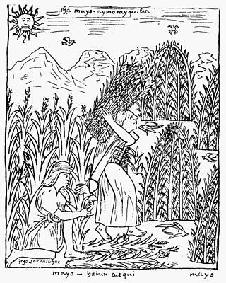 Primitive Drawing - Peru Harvesting Maize by Granger