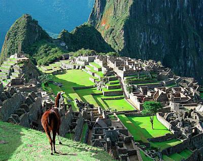 Peru, Machu Picchu, Llama Overlooks Art Print