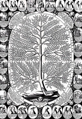 Genus Drawing - Peruvian Bark Or Jesuit Tree by Unknown