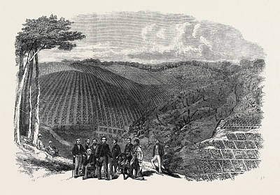 Plantation Drawing - Peruvian Bark Tree Plantations In The Neilgherry Hills by Indian School