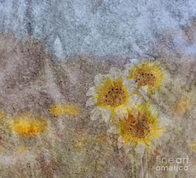 Photograph - Peruvian Daisy Garden by Shirley Mangini