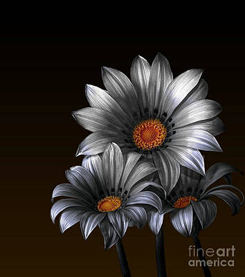 Photograph - Peruvian Daisy Silver And Gold by Shirley Mangini