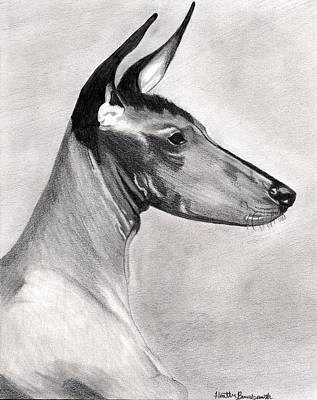 Peruvian Inca Orchid Dog Art Print by Olde Time  Mercantile