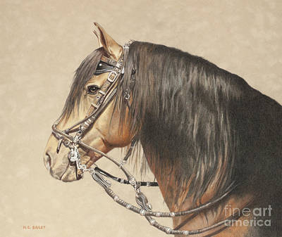 Drawing - Peruvian Stallion by Helen Bailey