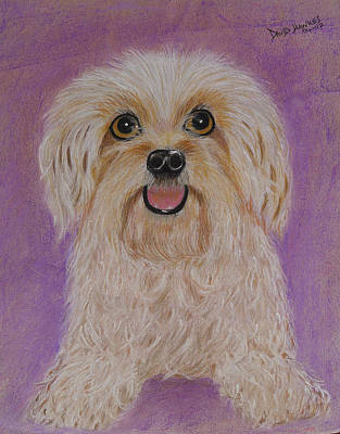 Painting - Pet Dog by David Hawkes