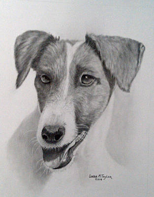Custom Pet Portrait Drawing - Pet Dog Portrait Smooth Fox Terrier Graphite Pencil by Linda Taylor